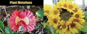 plant-mutation-map